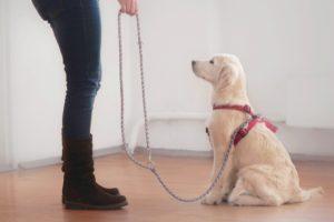 bien dresser et éduquer son chien