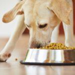 régime alimentaire équilibré chez le chien