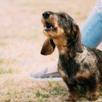 Comment faire stopper les aboiements d'un chien qui a peur