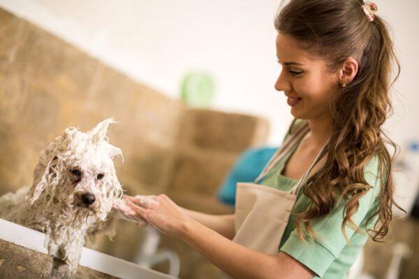 Nettoyer les oreilles du chien : comment s'y prendre ?